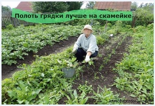 полоть грядки на огороде