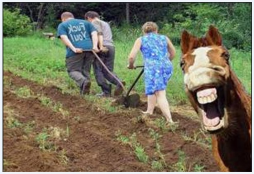 работа на огороде - юмор