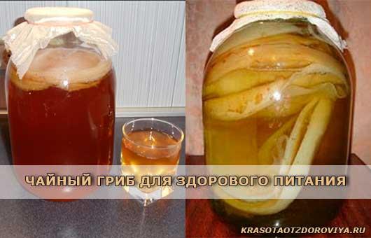 чайный-гриб